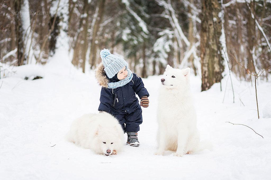 Зимние фотосессии с собаками